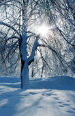Winterliche landschaft mit bäumen — Stockfoto