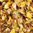 Fall leaves on the ground — Stock Photo