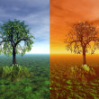 Stock Photo: Four seasons. Tree 3d graphic