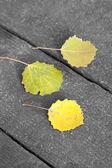 Caída de hojas en el suelo — Foto de Stock