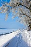 Winter scenery in park — Stock Photo