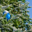 Christmas tree — Stock Photo #36017487
