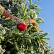 Christmas tree — Stock Photo #36017523