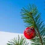 Glass ball on christmas tree — Stock Photo #36019737