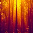 Forest in sunlight — Stock Photo