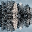 trees and water reflection — Stock Photo