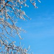 Frosty tree and blue sky — Stock Photo