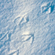 Bird tracks background — Stockfoto