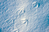 Bird tracks background — Stock Photo