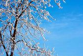 Frosty tree and blue sky — Stock Photo