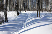 Winter forest and snowdrifts — Stock Photo