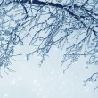 Icy tree — Stock Photo