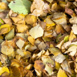 Fallen yellow leaves background — Stock Photo