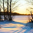 Winter sunset in forest — Stock Photo