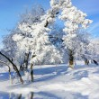 Trees in sunny cold day — Stock Photo #36419443