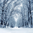Winter park, scenery — Stock Photo #36419489