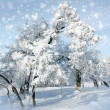 Snowstorm in winter park — Stock Photo