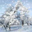 Snowstorm in winter park — Stock Photo #36419641