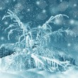 Winter scenery, snowstorm — Stock Photo #36419705