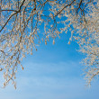 Frosty trees in cold day — Stock Photo