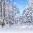 Winter scenery, snowstorm — Stock Photo #36419975