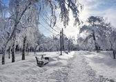 Winter park, dekoracje — Zdjęcie stockowe