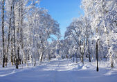冬公園の風景 — Foto de Stock