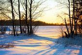 Tramonto di inverno nella foresta — Foto Stock