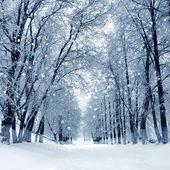 Winter park, scenery — Stock Photo