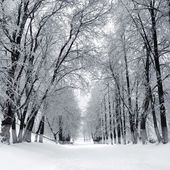 Winter park, scenery — Stock Photo
