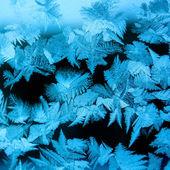 Icy winter pattern — Stock Photo