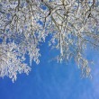 Trees in sunny cold day — Stock Photo