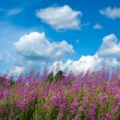 Stock Photo: Scenery with wildflowers