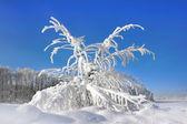 晴れた寒い日の木 — ストック写真