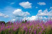 Scenery with wildflowers — Stock Photo