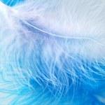 Bird's feather — Stock Photo