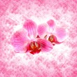 Beautiful pink orchid — Stock Photo #36806543