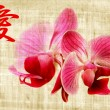 Beautiful pink orchid and hieroglyph love — Stock Photo