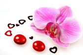 Orquídea de flor — Foto de Stock