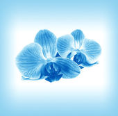 Flower orchid in blue mist — Foto Stock