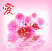 Flower pink orchid and hieroglyph Love — Stock Photo