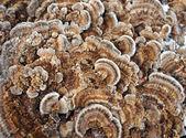 Tree fungus — Stock Photo