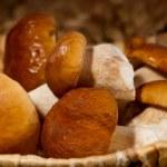 Mushroom cep — Stock Photo #36861455