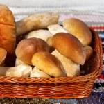 Mushroom cep — Stock Photo