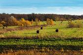 Autumnal scenery — Stock Photo