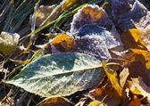 秋天的叶子 — 图库照片