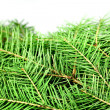 Fir tree — Stockfoto #36996625
