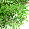 fir tree — Stock Photo #36996655