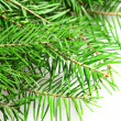 Fir tree — Stock fotografie #36996655