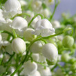Wild flowers Lily of the valley — Stock Photo